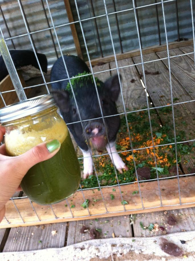 Pig is doing well, Juicing is doing well